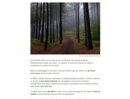 Abbracciare gli alberi, quale modo migliore di tornare alla normalità
