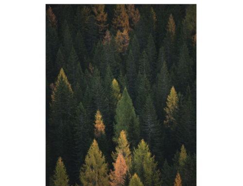 La forestazione urbana o come riportare la natura nei luoghi di vita